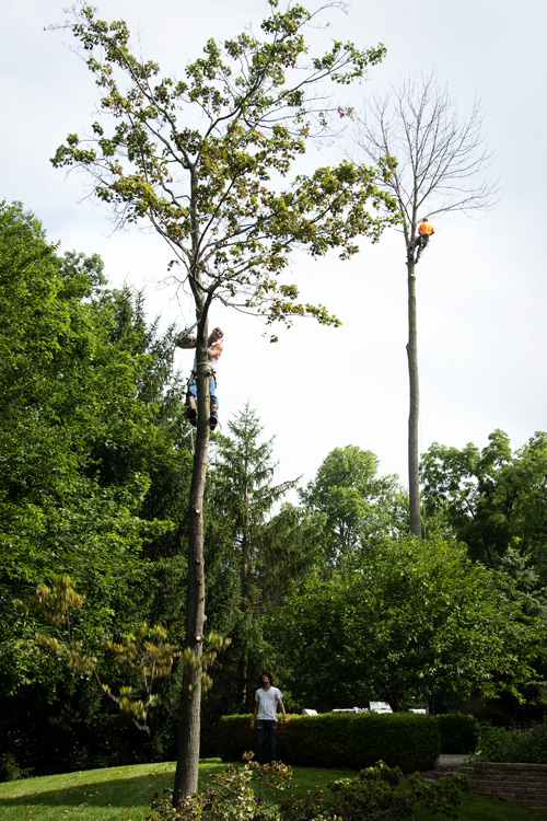 Another shot of the tree cutters — the foreground is the best of the